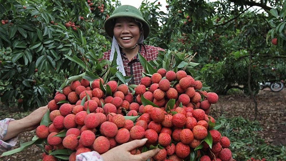 Nông dân Bắc Giang thu 5.800 tỷ đồng từ vải thiều